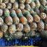 Thơm mật Đơn Dương Thùng 6 trái thơm mật Lâm Đồng thùng 12kg TPHCM