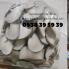 Nấm bào ngư trắng (Nấm sò trắng) TPHCM