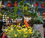 Bonsai dừa hình trâu trồng chậu từ gỗ dừa tự nhiên