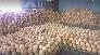 Quả dừa khô Bến Tre
