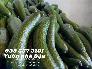 Bán quả bơ 034 Lâm Đồng Size 23