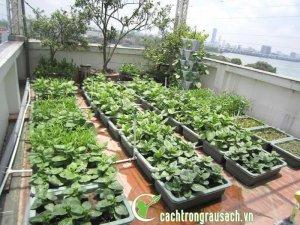 Chậu Nhựa Xanh trồng rau ăn lá