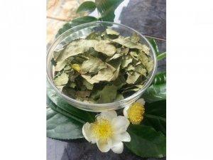 Bán bột trà xanh nguyên chất hàng Handmade