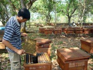 Mật ong nguyên chất Dắk Lắk, BMT