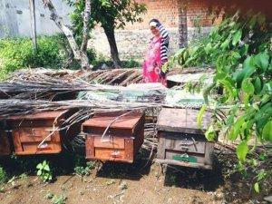 sữa ong chúa nhà nuôi nhé các bạn yên tâm  về chất lượng nếu sử dụng lâu dài