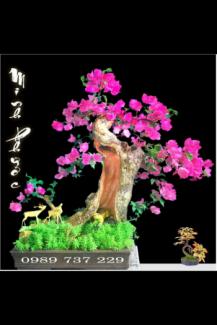 Cây hoa giấy đẹp giá rẻ