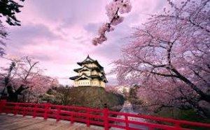 Tour Du Lịch Nhật Bản, Có Tour Tết