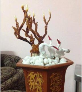 Cây cảnh Linh chi sừng hươu làm quà dịp Tết Bính Thân cực đẹp và ý nghĩa