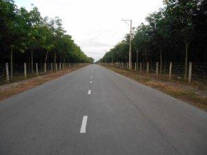 Bán 5,7 Mẫu Đất Trắng Sát Đường Nhựa Tại Đồng Phú Bình Phước