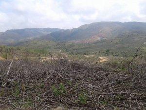 Đất bằng phẳng (400-500 ha) và đất triền