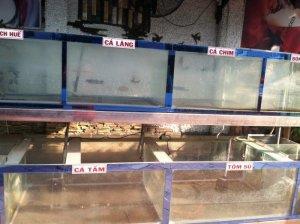 Bán bể cá cũ giá rẻ