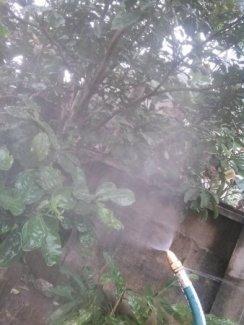 sử dụng bes phun sương tưới lan loại điều chỉnh để tưới cây rửa xe