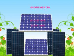 Pin năng lượng mặt trời mono và poly