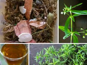Như một loại trà giải nhiệt, bạch hoa xà thiệt thảo phơi khô phối hợp cùng các vị thuốc nam có vị ngọt cho dễ uống hơn.