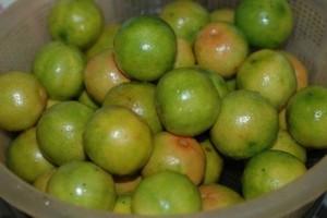 Bán giống cây chanh bốn mùa , chanh giấy limca, chanh mỹ không hạt, chanh đào, chanh trùm.