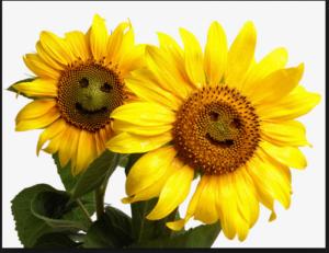 Hạt giống Hoa Dướng Hương mặt cười