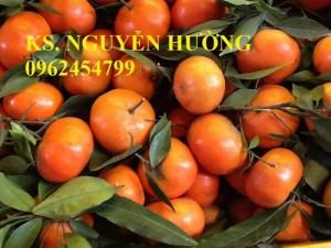 Chuyên cung cấp giống cây cam