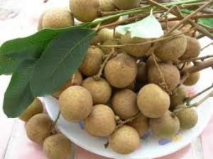 Chuyên cung cấp giống cây nhãn muộn T6, miền Thiết