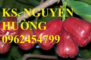 Chuyên cung cấp giống cây roi thái đỏ