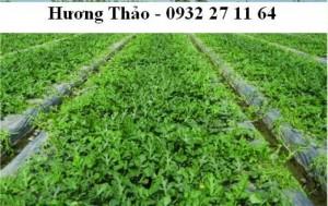 Màng phủ nông nghiệp cao cấp