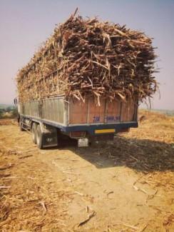 Bán gấp xe tải, chở gia súc, gia cầm, chở mía, mì