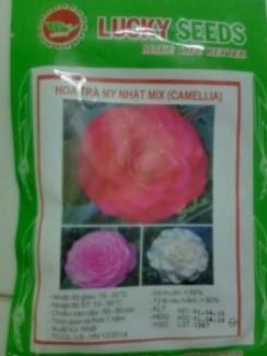 Hạt giống hoa trà my nhật MIX ( CAMELLIA )
