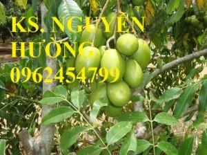 Chuyên cung cấp giống cây cóc bao tử không hạt chất lượng cao