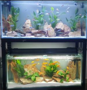 Bạn muốn đặt thiết kế một hồ cá cho đúng phong thủy? Chuyện nhỏ!