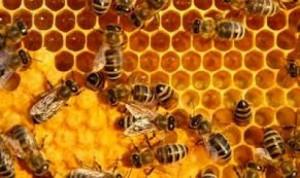 Xáp ong nguyên chất