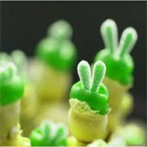Hạt giống tai thỏ