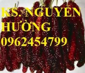Chuyên cung cấp giống cây dâu quả dài đài loan chất lượng cao