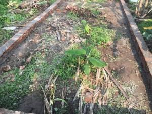 Đất thổ cư sổ đỏ tại xã Đồng Tháp