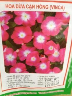 Chuyên cung cấp hạt giống hoa F1 các loại