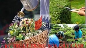 Học khóa chứng chỉ trồng hoa cây cảnh tại Hà Nội