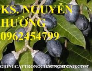 Chuyên cung cấp giống cây trám đen