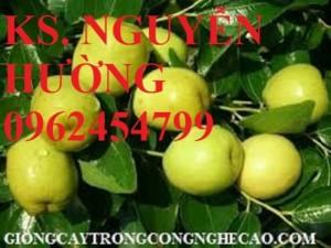 Chuyên cung cấp giống cây táo đào vàng chất lượng cao