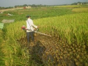 Đủ bộ máy gặt lúa honda GX35, máy gặt lúa...
