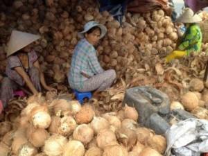 Chuyên cung cấp dừa ,trái cây giá sỉ