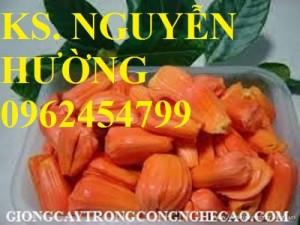 Chuyên cung cấp giống cây mít ruột đỏ chất lượng cao