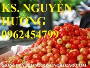 Chuyên cung cấp giống cây sơ ri (sơri) chất lượng cao