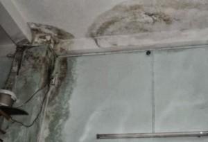 Khắc phục tường bị mốc bong tróc từng mảng chuyên nghiệp