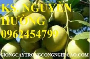 Chuyên cung cấp giống cây táo chua gia lộc chuẩn giống