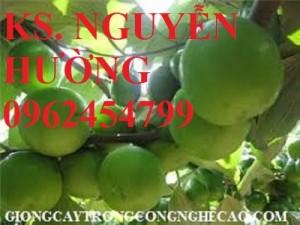 Chuyên cung cấp cây giống táo ngọt d28