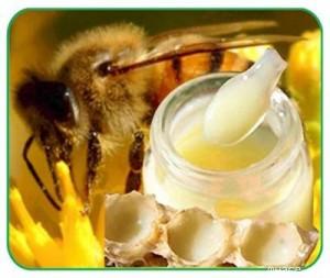 Sữa Ong Chúa Tây Nguyên (ĐăkLăk) Nguyên Chất.