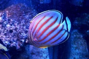 Các loài cá biển mới nhất hiện đang có mặt ở Ocean