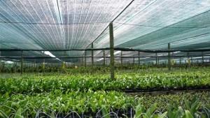 Cung cấp lưới che nắng công trình sản xuất tại Thái Lan