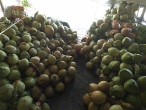 Dừa tươi miền tây