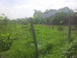 Đất giá rẻ ,bình chánh.150 m2