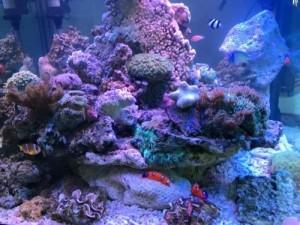 Ocean hướng dẫn cách cho cá cảnh ăn và nguồn thức ăn của cá cảnh