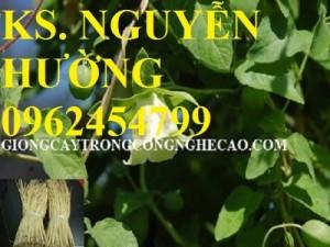 Chuyên cung cấp cây giống đẳng sâm và sản phẩm đẳng sâm chất lượng cao